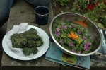 Nettle and Lime flower fritters and wild leaf and flower salad