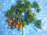 Herbs and flowers we found in Brockwell Park