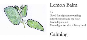 lemon balm copy