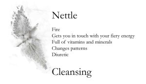 Cleansing Nettle